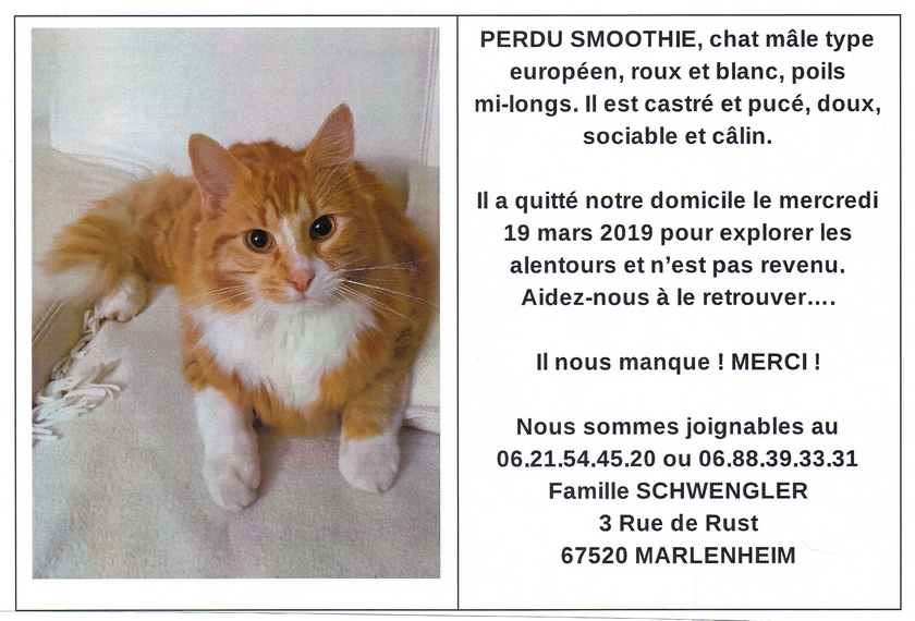 2019 04 01 disparition chat a marlenheim